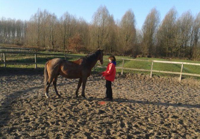 begeleiding-individu-consult met het paard