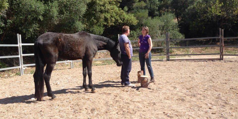 opstelling met paard
