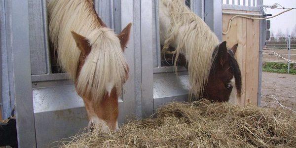 HIT Actief (waar de paarden staan)